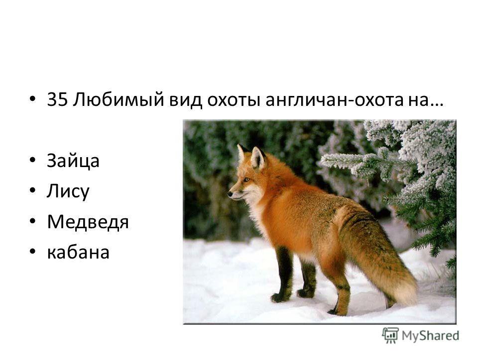 35 Любимый вид охоты англичан-охота на… Зайца Лису Медведя кабана