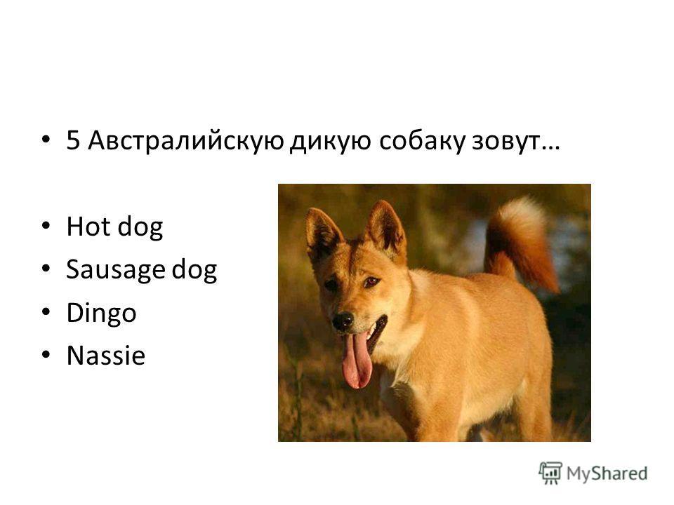 5 Австралийскую дикую собаку зовут… Hot dog Sausage dog Dingo Nassie