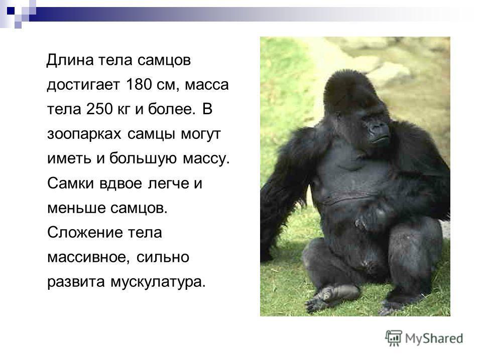 Длина тела самцов достигает 180 см, масса тела 250 кг и более. В зоопарках самцы могут иметь и большую массу. Самки вдвое легче и меньше самцов. Сложение тела массивное, сильно развита мускулатура.