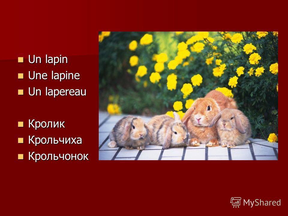 Un lapin Un lapin Une lapine Une lapine Un lapereau Un lapereau Кролик Кролик Крольчиха Крольчиха Крольчонок Крольчонок