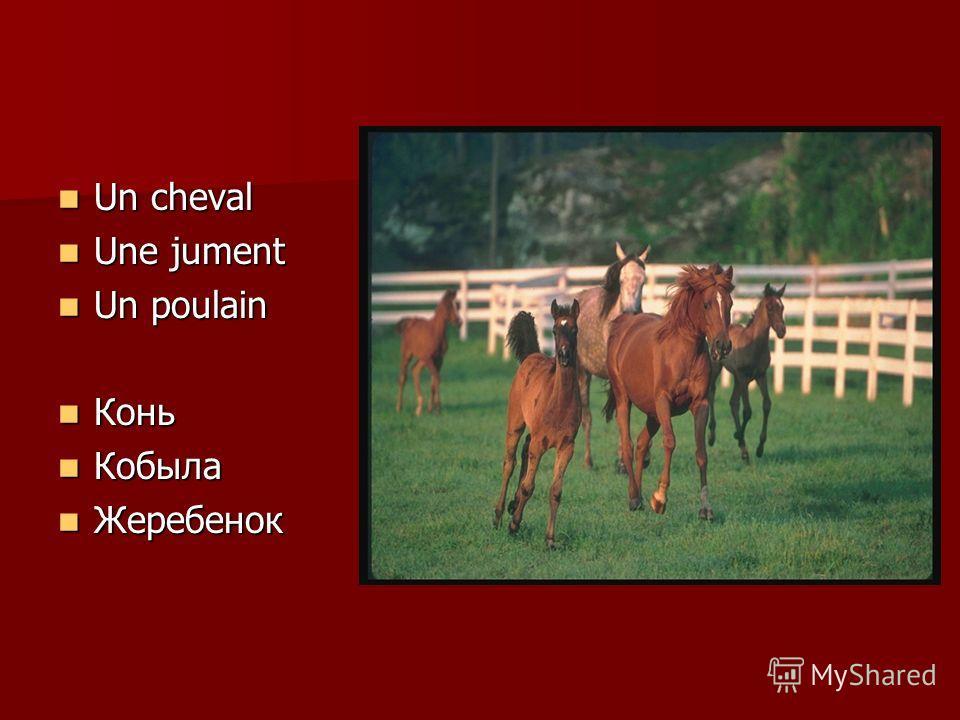 Un cheval Un cheval Une jument Une jument Un poulain Un poulain Конь Конь Кобыла Кобыла Жеребенок Жеребенок