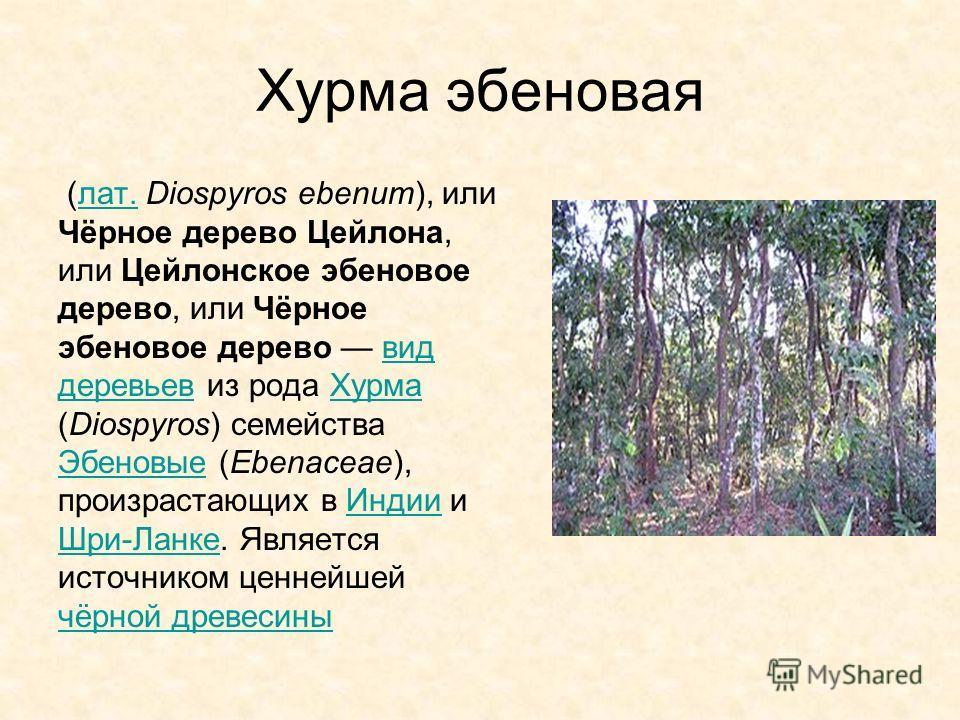 Хурма эбеновая (лат. Diospyros ebenum), или Чёрное дерево Цейлона, или Цейлонское эбеновое дерево, или Чёрное эбеновое дерево вид деревьев из рода Хурма (Diospyros) семейства Эбеновые (Ebenaceae), произрастающих в Индии и Шри-Ланке. Является источник