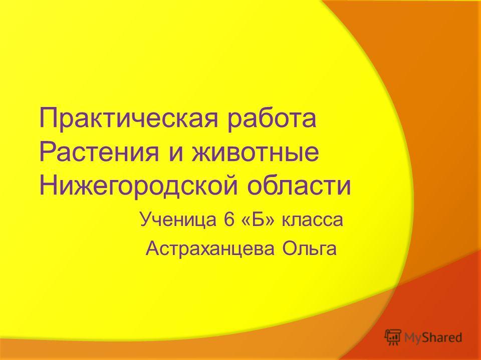 Практическая работа Растения и животные Нижегородской области Ученица 6 «Б» класса Астраханцева Ольга