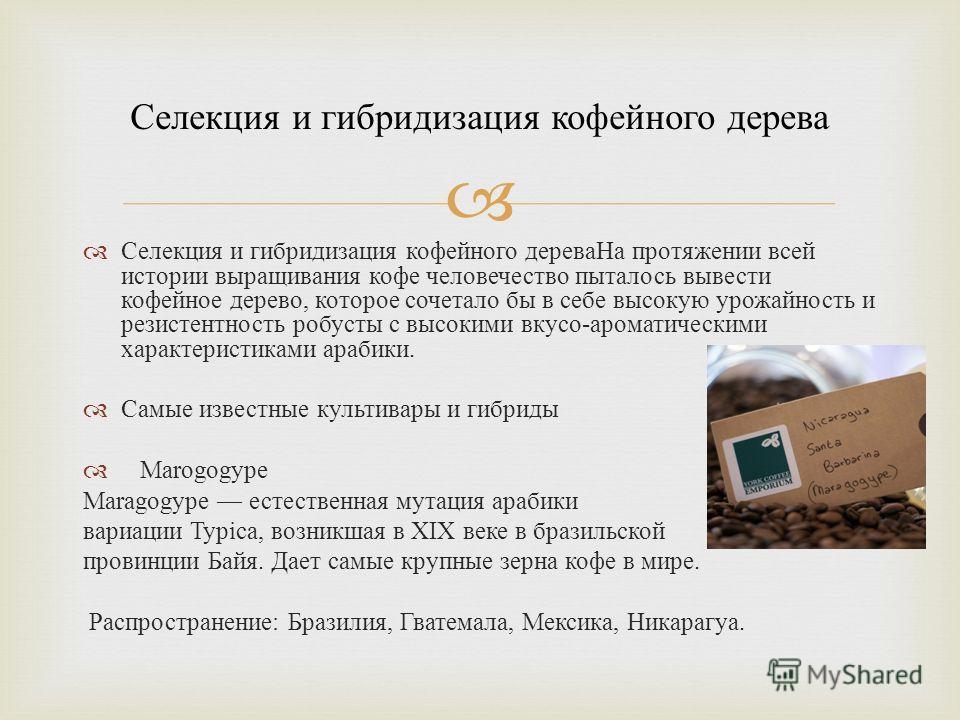 Селекция и гибридизация кофейного дерева На протяжении всей истории выращивания кофе человечество пыталось вывести кофейное дерево, которое сочетало бы в себе высокую урожайность и резистентность робусты с высокими вкусо - ароматическими характеристи