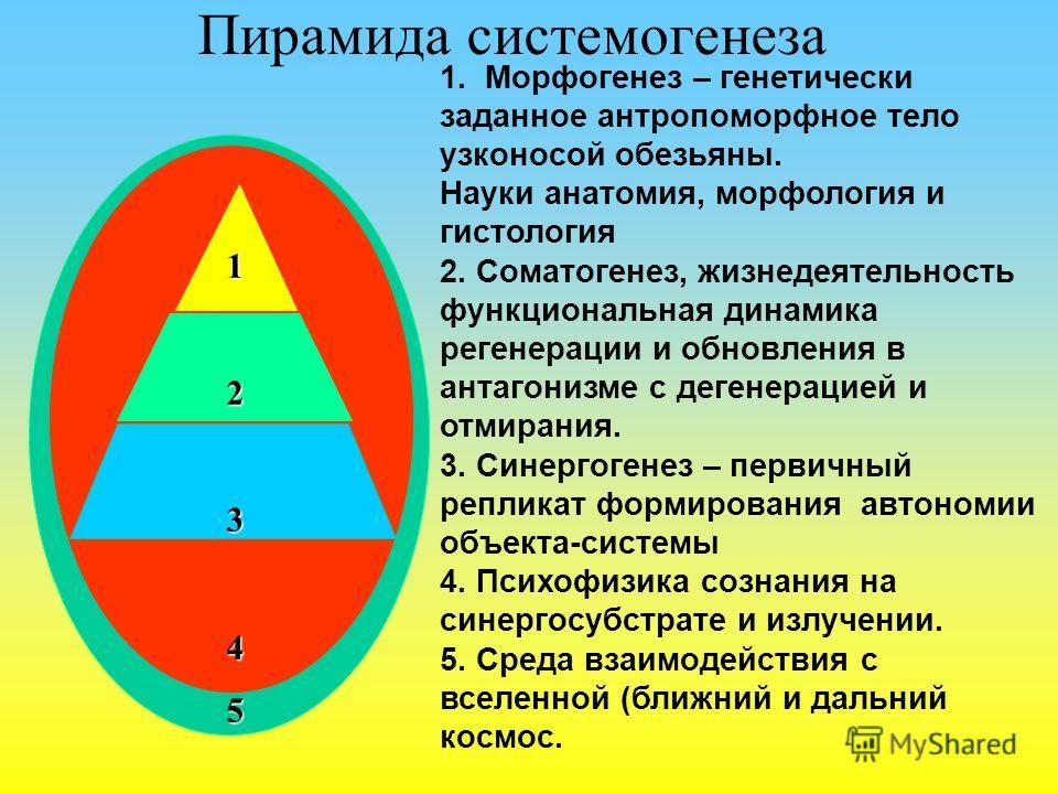 Пирамида системогенеза 12345 1. Морфогенез – генетически заданное антропоморфное тело узконосой обезьяны. Науки анатомия, морфология и гистология 2. Соматогенез, жизнедеятельность функциональная динамика регенерации и обновления в антагонизме с деген