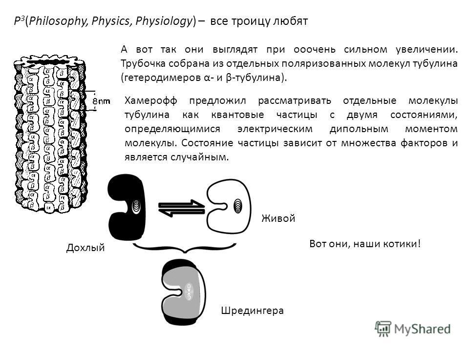 P 3 (Philosophy, Physics, Physiology) – все троицу любят А вот так они выглядят при ооочень сильном увеличении. Трубочка собрана из отдельных поляризованных молекул тубулина (гетеродимеров α- и β-тубулина). Хамерофф предложил рассматривать отдельные