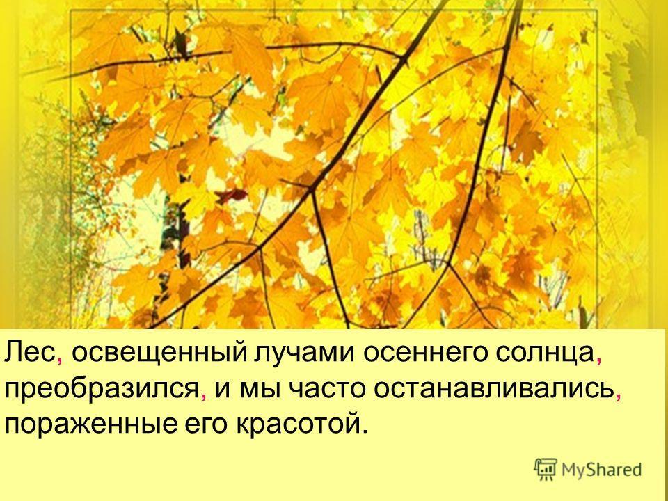 Лес, освещенный лучами осеннего солнца, преобразился, и мы часто останавливались, пораженные его красотой.
