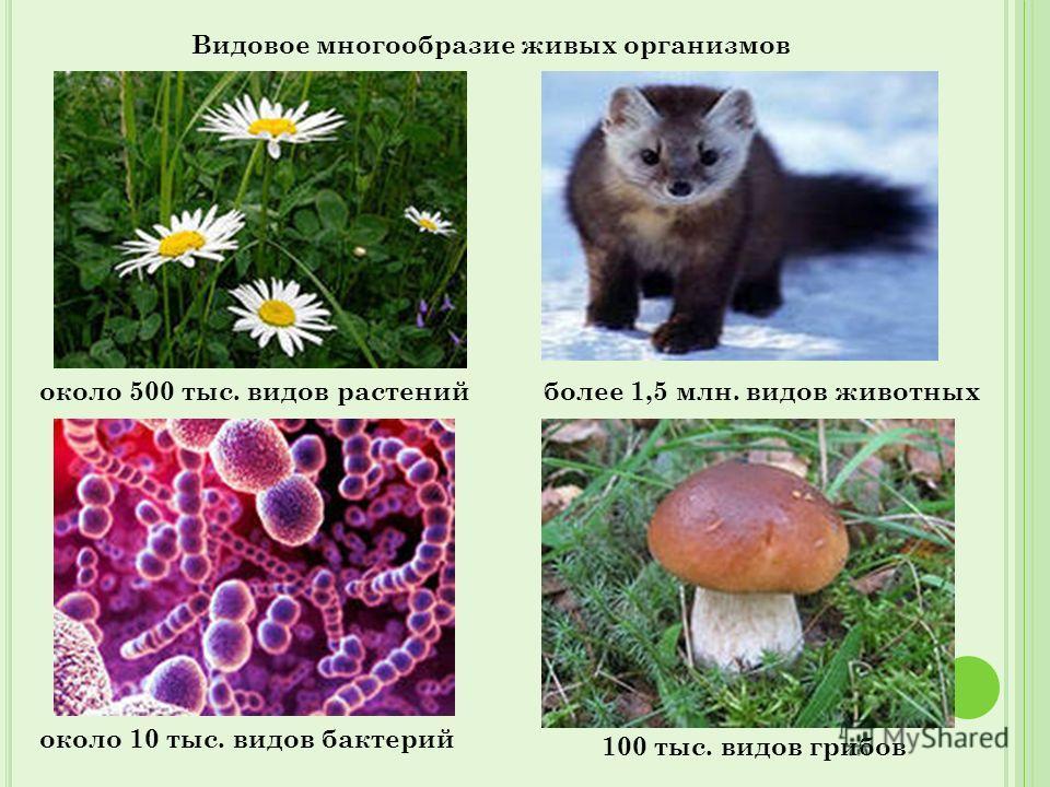 Видовое многообразие живых организмов около 500 тыс. видов растенийболее 1,5 млн. видов животных 100 тыс. видов грибов около 10 тыс. видов бактерий