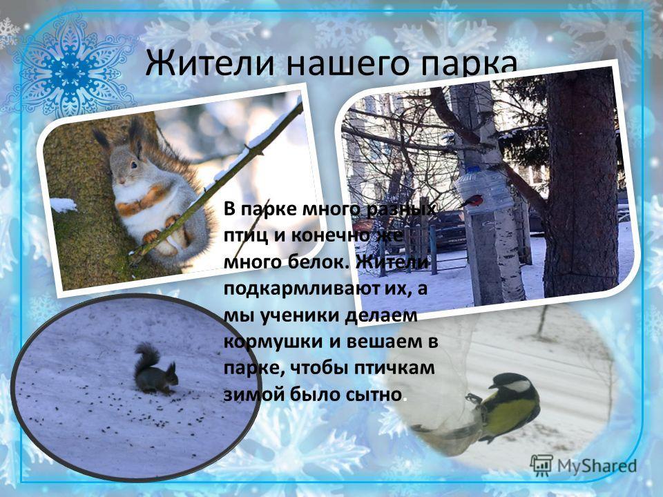 Жители нашего парка В парке много разных птиц и конечно же много белок. Жители подкармливают их, а мы ученики делаем кормушки и вешаем в парке, чтобы птичкам зимой было сытно.