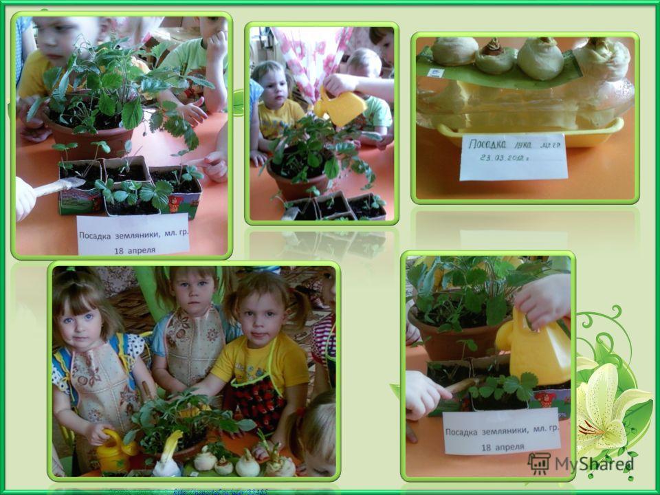 Матюшкина А.В. http://nsportal.ru/user/33485http://nsportal.ru/user/33485 Провожу дополнительно большую работу по экологии. Дети моей группы ухаживают за растениями в группе и на улице. Весной привлекаю детей к посеву лука и семян цветов для посадки