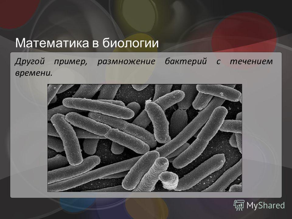 Математика в биологии Другой пример, размножение бактерий с течением времени.