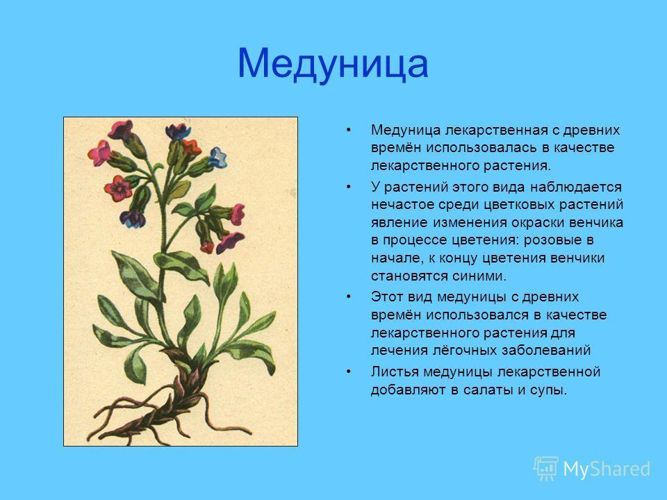 Медуница Медуница лекарственная с древних времён использовалась в качестве лекарственного растения. У растений этого вида наблюдается нечастое среди цветковых растений явление изменения окраски венчика в процессе цветения: розовые в начале, к концу ц