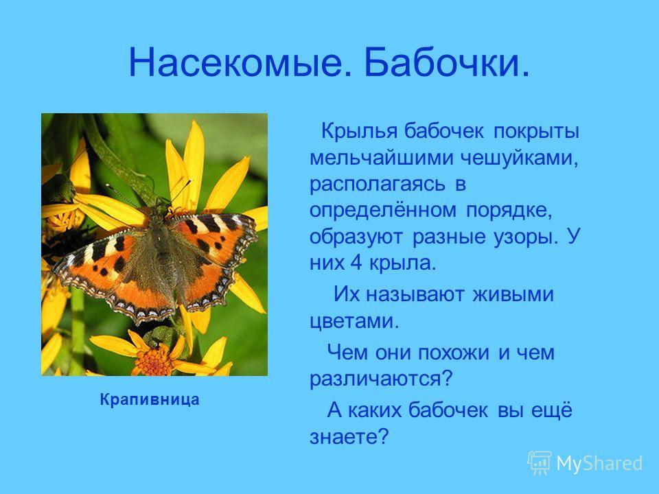 Насекомые. Бабочки. Крылья бабочек покрыты мельчайшими чешуйками, располагаясь в определённом порядке, образуют разные узоры. У них 4 крыла. Их называют живыми цветами. Чем они похожи и чем различаются? А каких бабочек вы ещё знаете? Крапивница