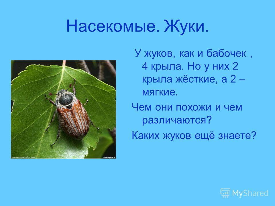 Насекомые. Жуки. У жуков, как и бабочек, 4 крыла. Но у них 2 крыла жёсткие, а 2 – мягкие. Чем они похожи и чем различаются? Каких жуков ещё знаете?