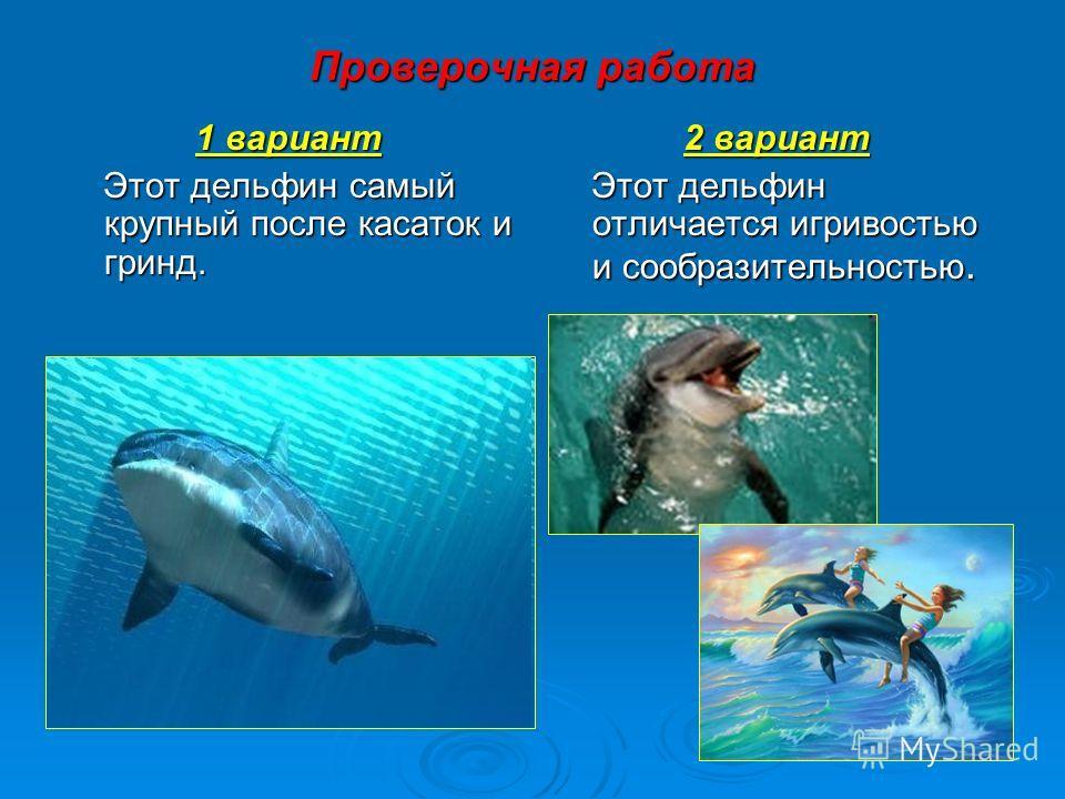 Проверочная работа 1 вариант Этот дельфин самый крупный после касаток и гринд. Этот дельфин самый крупный после касаток и гринд. 2 вариант Этот дельфин отличается игривостью и сообразительностью. Этот дельфин отличается игривостью и сообразительность