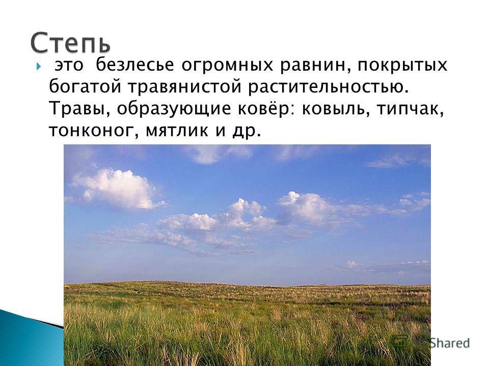 это безлесье огромных равнин, покрытых богатой травянистой растительностью. Травы, образующие ковёр: ковыль, типчак, тонконог, мятлик и др.