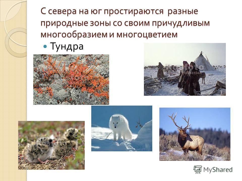С севера на юг простираются разные природные зоны со своим причудливым многообразием и многоцветием Тундра