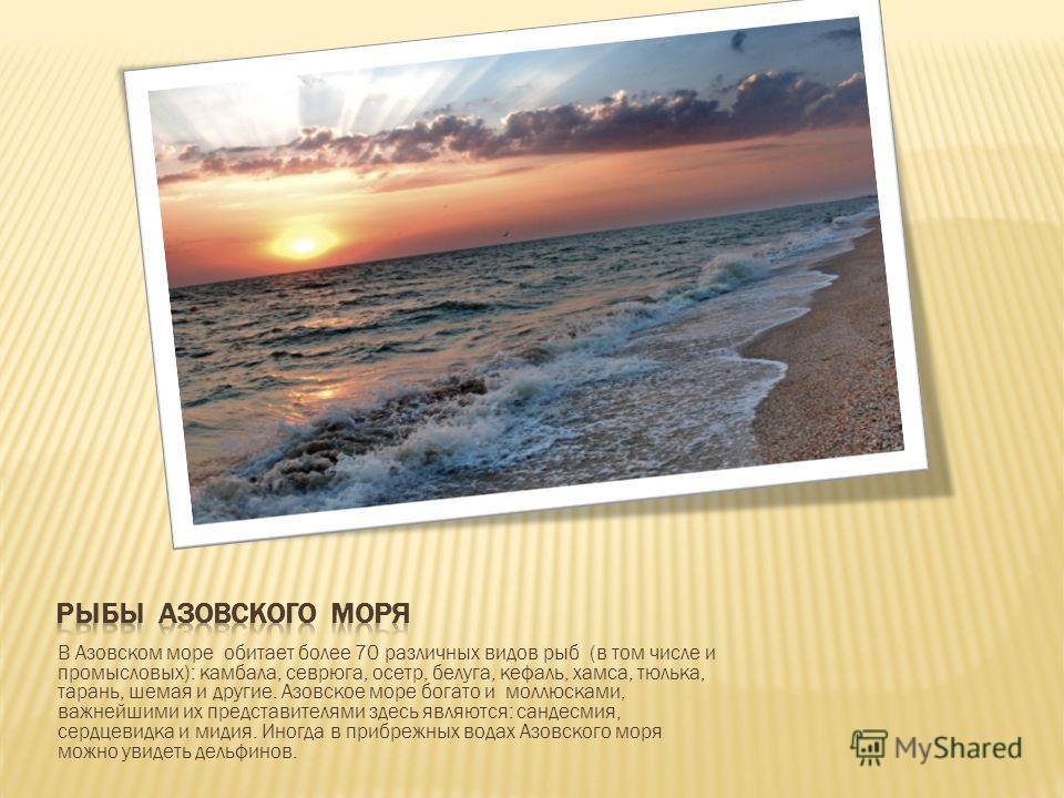 В Азовском море обитает более 70 различных видов рыб (в том числе и промысловых): камбала, севрюга, осетр, белуга, кефаль, хамса, тюлька, тарань, шемая и другие. Азовское море богато и моллюсками, важнейшими их представителями здесь являются: сандесм