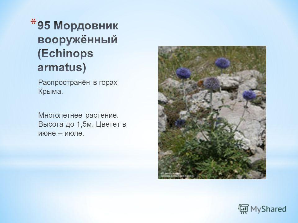 Распространён в горах Крыма. Многолетнее растение. Высота до 1,5 м. Цветёт в июне – июле.