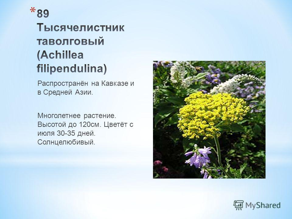 Распространён на Кавказе и в Средней Азии. Многолетнее растение. Высотой до 120 см. Цветёт с июля 30-35 дней. Солнцелюбивый.