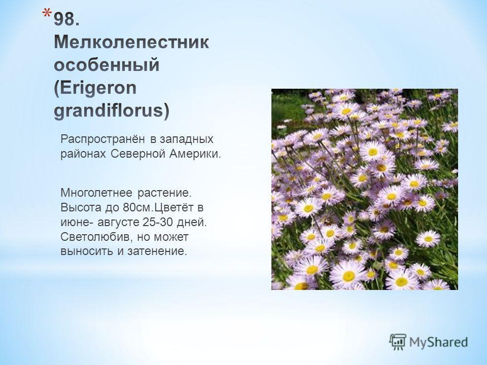 Распространён в западных районах Северной Америки. Многолетнее растение. Высота до 80 см.Цветёт в июне- августе 25-30 дней. Светолюбив, но может выносить и затенение.