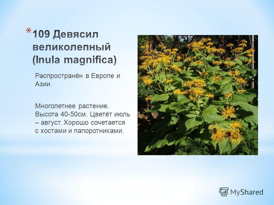Распространён в Европе и Азии. Многолетнее растение. Высота 40-50 см. Цветёт июль – август. Хорошо сочетается с хостами и папоротниками.