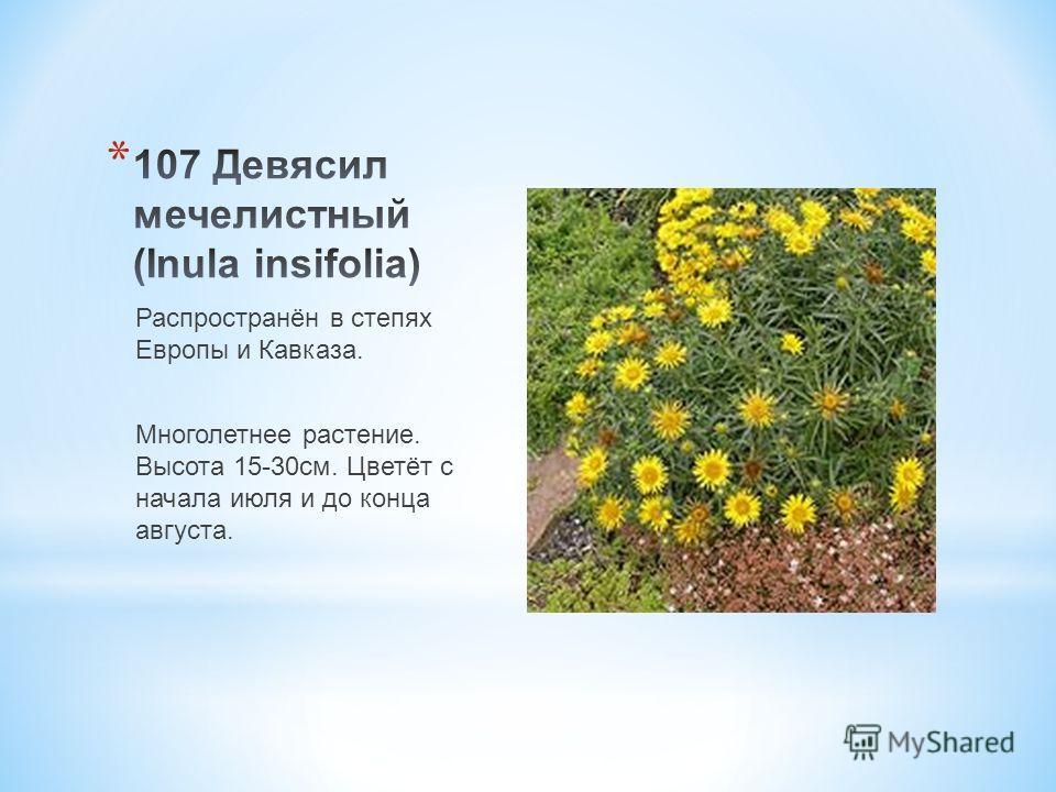 * Мм\ Распространён в степях Европы и Кавказа. Многолетнее растение. Высота 15-30 см. Цветёт с начала июля и до конца августа.