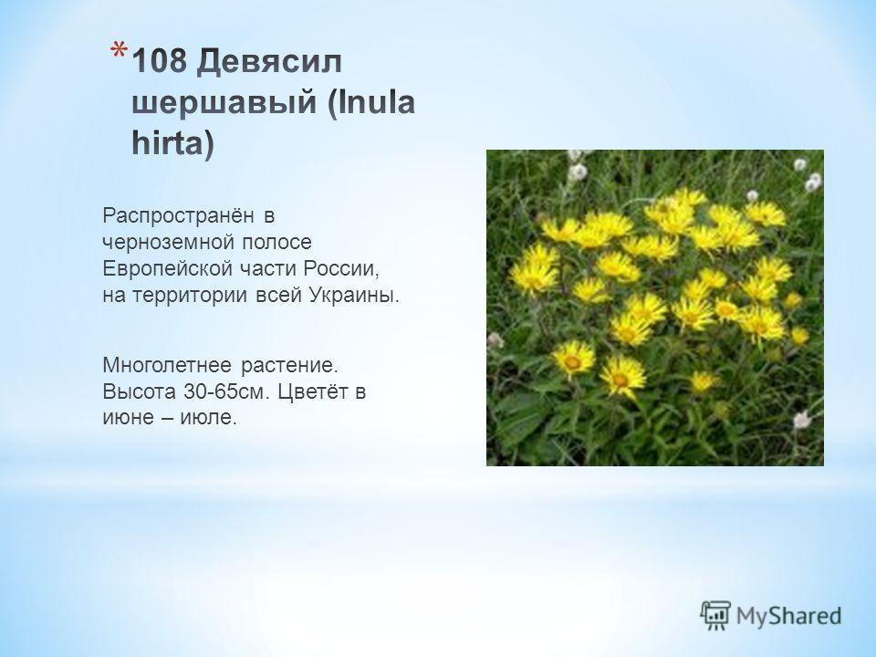 Распространён в черноземной полосе Европейской части России, на территории всей Украины. Многолетнее растение. Высота 30-65 см. Цветёт в июне – июле.