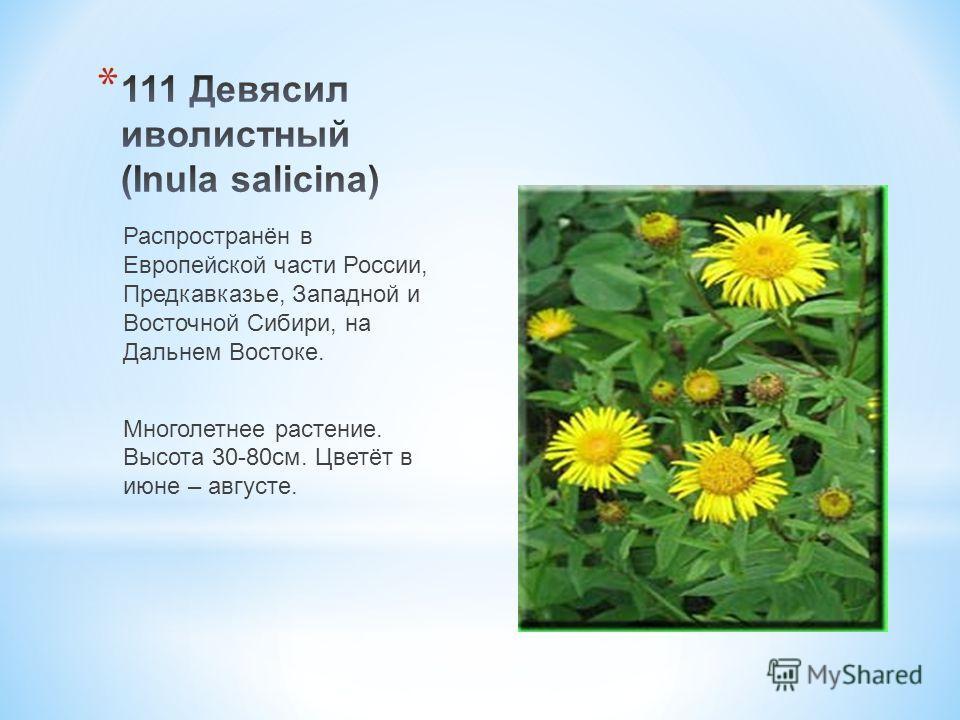 Распространён в Европейской части России, Предкавказье, Западной и Восточной Сибири, на Дальнем Востоке. Многолетнее растение. Высота 30-80 см. Цветёт в июне – августе.
