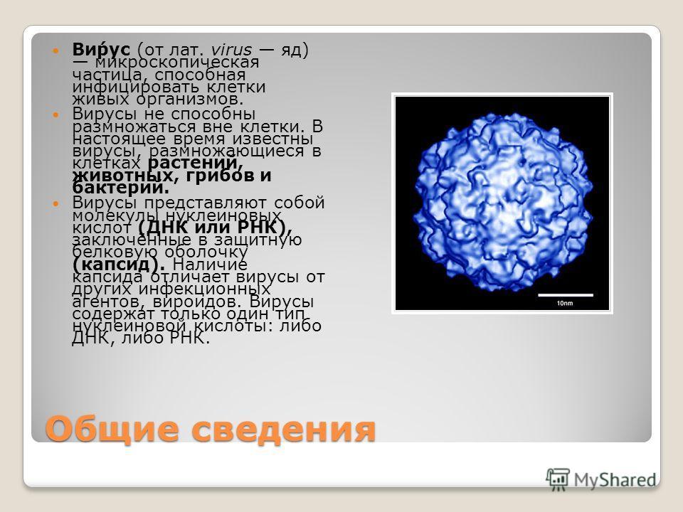 Общие сведения Ви́рус (от лат. virus яд) микроскопическая частица, способная инфицировать клетки живых организмов. Вирусы не способны размножаться вне клетки. В настоящее время известны вирусы, размножающиеся в клетках растений, животных, грибов и ба