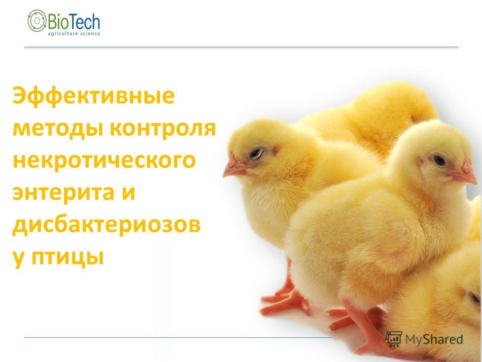 Эффективные методы контроля некротического энтерита и дисбактериозов у птицы