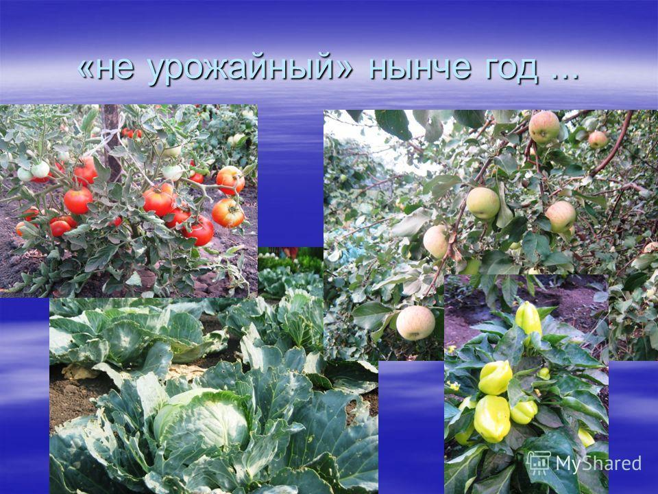 «не урожайный» нынче год...