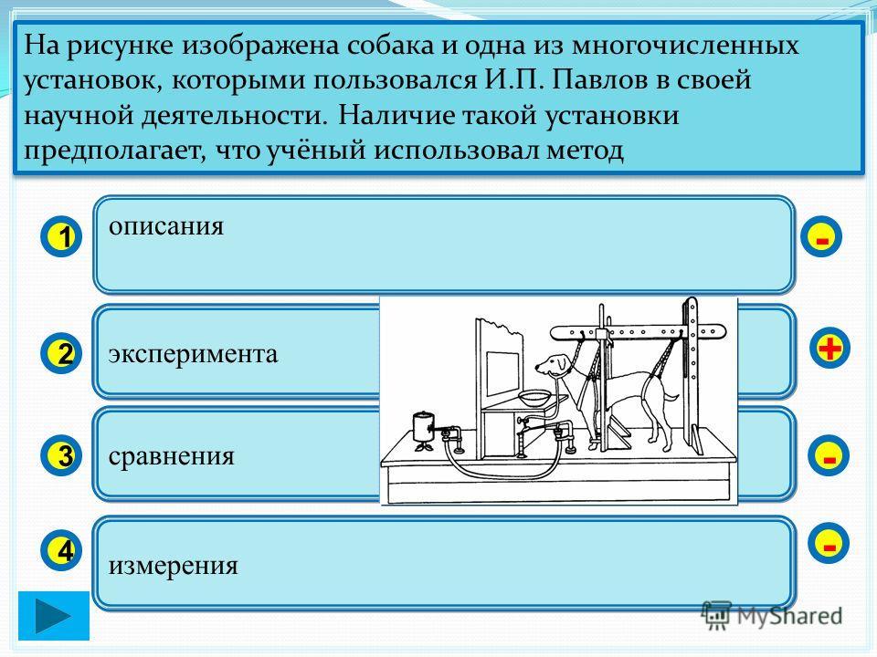 описания 1 2 3 4 эксперимента сравнения измерения - + - - На рисунке изображена собака и одна из многочисленных установок, которыми пользовался И.П. Павлов в своей научной деятельности. Наличие такой установки предполагает, что учёный использовал мет