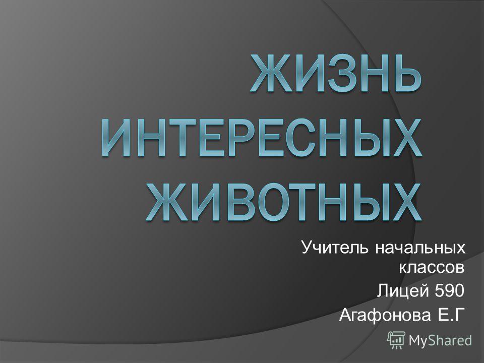 Учитель начальных классов Лицей 590 Агафонова Е.Г