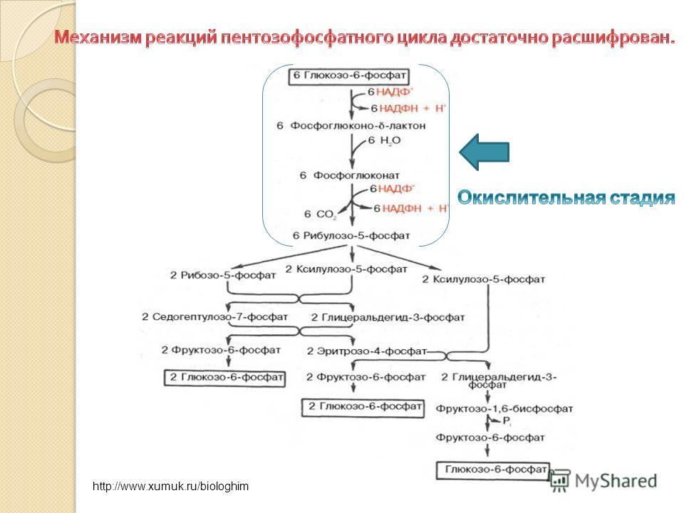 http://www.xumuk.ru/biologhim