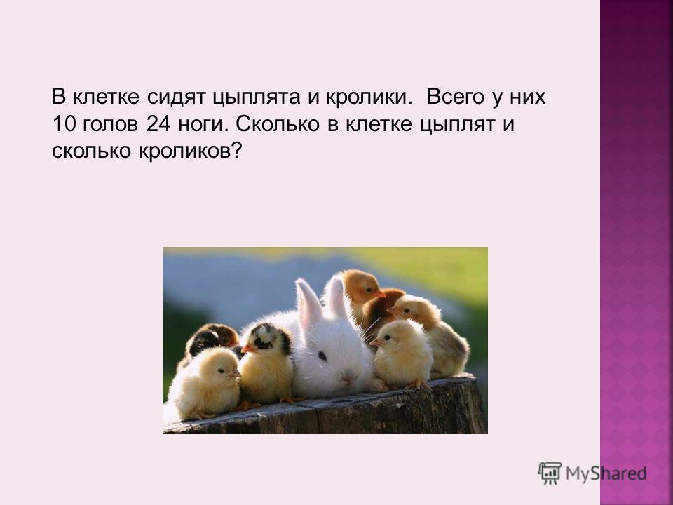 В клетке сидят цыплята и кролики. Всего у них 10 голов 24 ноги. Сколько в клетке цыплят и сколько кроликов?