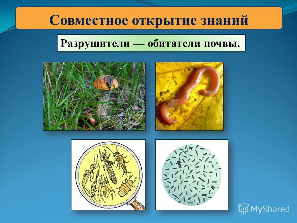 Совместное открытие знаний Разрушители обитатели почвы.