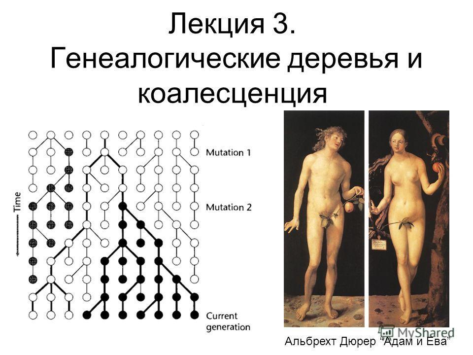 Лекция 3. Генеалогические деревья и коалесценция Альбрехт Дюрер Адам и Ева