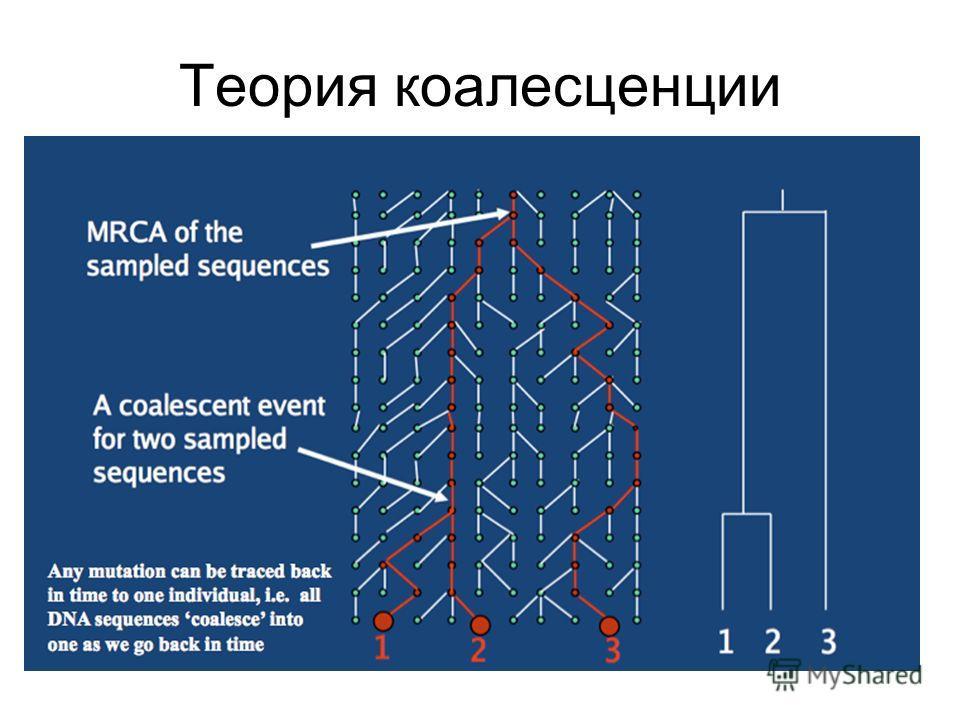 Теория коалесценции