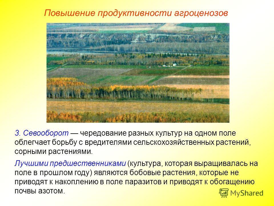 Повышение продуктивности агроценозов 3. Севооборот чередование разных культур на одном поле облегчает борьбу с вредителями сельскохозяйственных растений, сорными растениями. Лучшими предшественниками (культура, которая выращивалась на поле в прошлом
