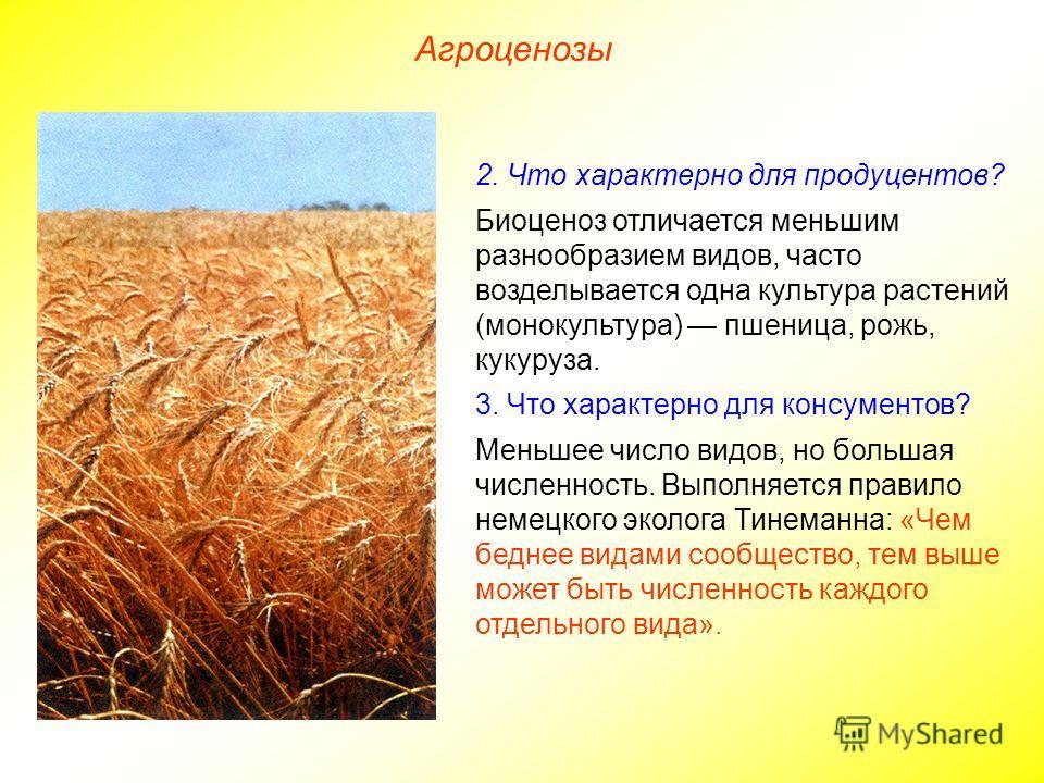 Агроценозы 2. Что характерно для продуцентов? Биоценоз отличается меньшим разнообразием видов, часто возделывается одна культура растений (монокультура) пшеница, рожь, кукуруза. 3. Что характерно для консументов? Меньшее число видов, но большая числе