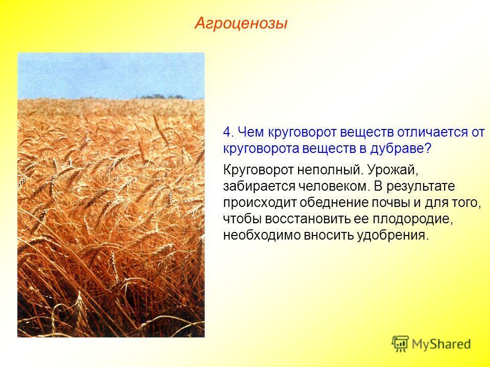 Агроценозы 4. Чем круговорот веществ отличается от круговорота веществ в дубраве? Круговорот неполный. Урожай, забирается человеком. В результате происходит обеднение почвы и для того, чтобы восстановить ее плодородие, необходимо вносить удобрения.