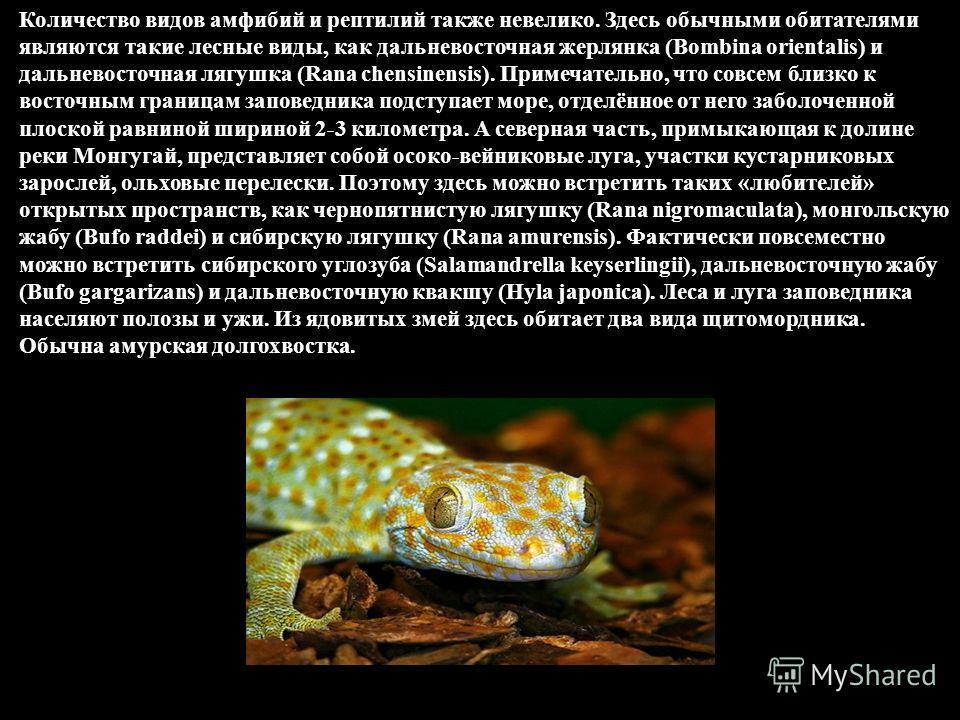 Количество видов амфибий и рептилий также невелико. Здесь обычными обитателями являются такие лесные виды, как дальневосточная жерлянка (Bombina orientalis) и дальневосточная лягушка (Rana chensinensis). Примечательно, что совсем близко к восточным г