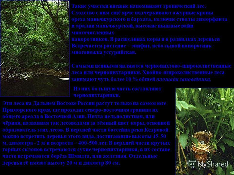 Такие участки внешне напоминают тропический лес. Сходство с ним ещё ярче подчеркивают ажурные кроны ореха маньчжурского и бархата, колючие стволы диморфанта и аралии маньчжурской, высокие пышные вайи многочисленных папоротников. В расщелинах коры и в