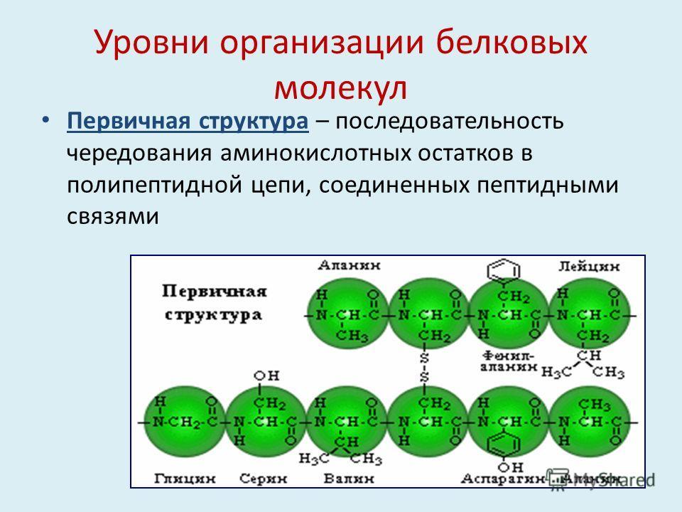 Уровни организации белковых молекул Первичная структура – последовательность чередования аминокислотных остатков в полипептидной цепи, соединенных пептидными связями