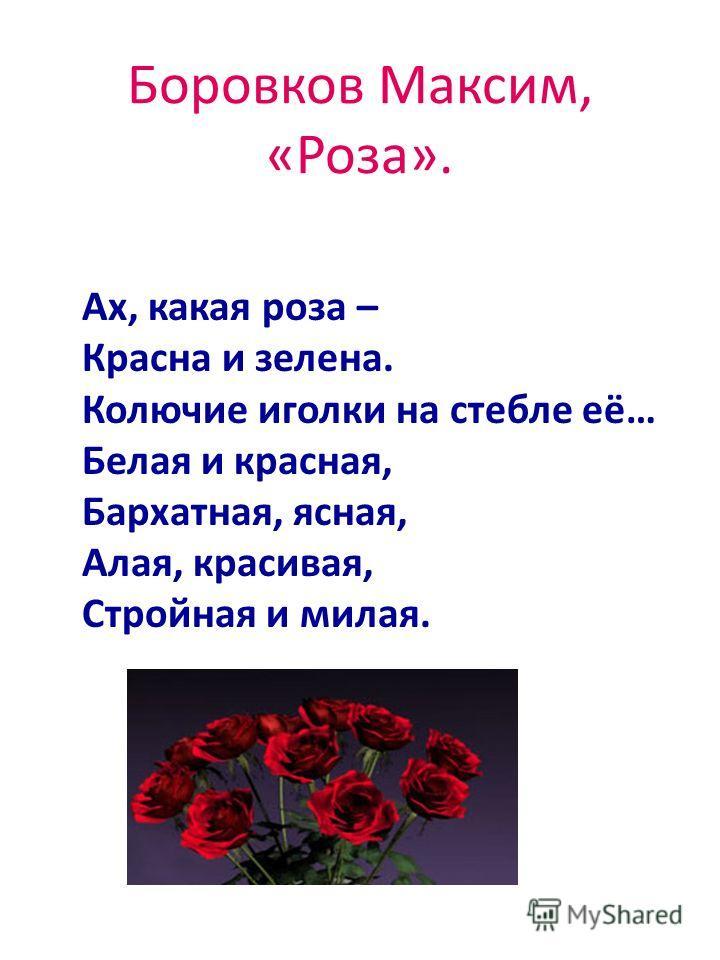 Боровков Максим, «Роза». Ах, какая роза – Красна и зелена. Колючие иголки на стебле её… Белая и красная, Бархатная, ясная, Алая, красивая, Стройная и милая.