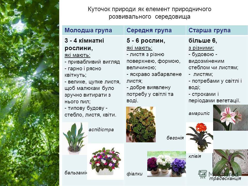 Free Powerpoint Templates Page 6 Куточок природе як елемент природничого розвивального середовища Молодша группа Середня группа Старша группа 3 - 4 кімнатні рослини, які мають: - привабливий вигляд - гарна і росно квітнуть; - великие, пупке листья, щ