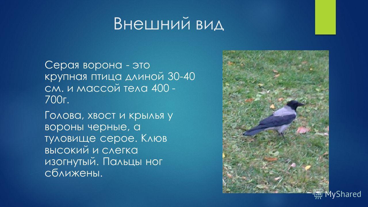 Внешний вид Серая ворона - это крупная птица длиной 30-40 см. и массой тела 400 - 700 г. Голова, хвост и крылья у вороны черные, а туловище серое. Клюв высокий и слегка изогнутый. Пальцы ног сближены.