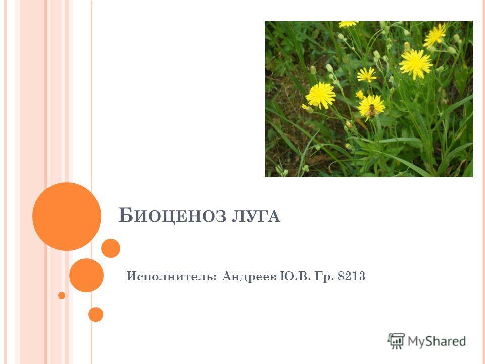 Б ИОЦЕНОЗ ЛУГА Исполнитель: Андреев Ю.В. Гр. 8213