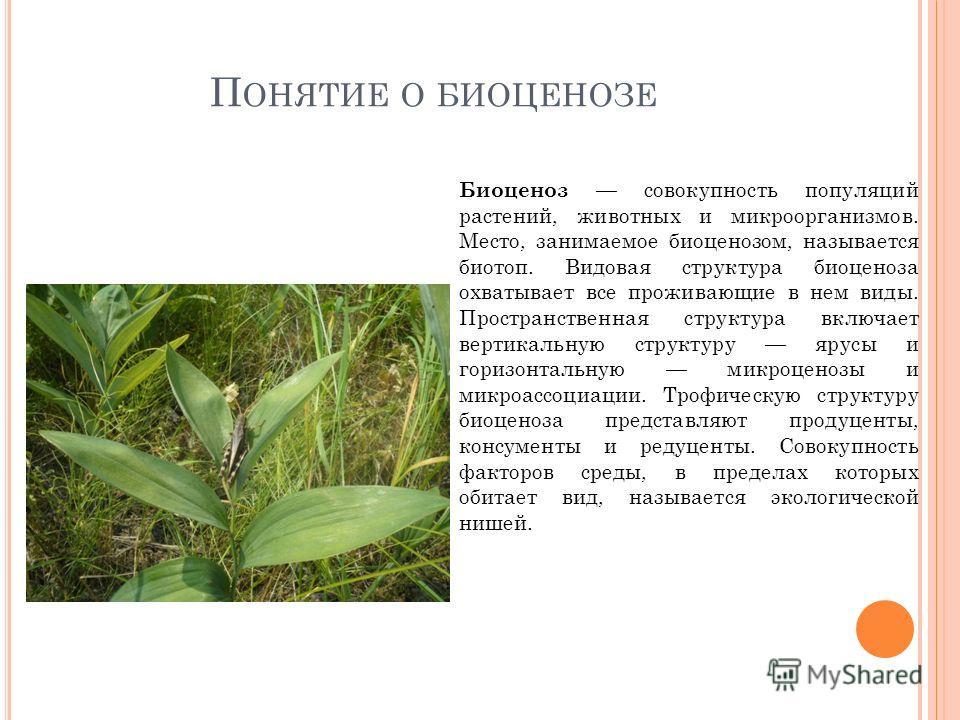 П ОНЯТИЕ О БИОЦЕНОЗЕ Биоценоз совокупность популяций растений, животных и микроорганизмов. Место, занимаемое биоценозом, называется биотоп. Видовая структура биоценоза охватывает все проживающие в нем виды. Пространственная структура включает вертика